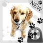 Cute Dog v2 - GO Locker Theme 3.0 APK
