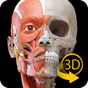 Muscle | Skeleton - 3D Anatomy 2.0.1
