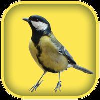Vogel fluiten geluiden icon