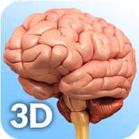 Brain Anatomy Pro.