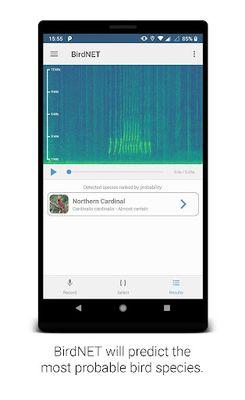 BirdNET image 3: Bird sound identification