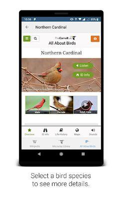 BirdNET image 2: Bird sound identification