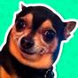 Best Dog Stickers for WhatsApp WAStickerApps