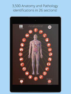 Image 2 of Anatomist - Anatomy Quiz Game