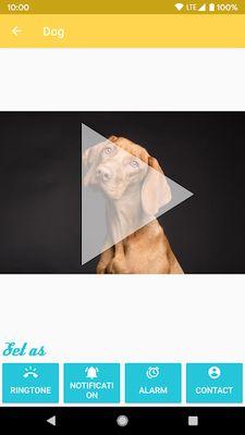 Picture 4 of Animal Ringtones - Ringtones