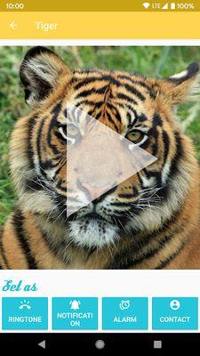 Picture 2 of Animal Ringtones - Ringtones