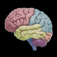 3D Brain