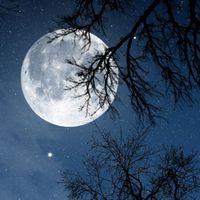 Ikon Relax malam - suara Alam
