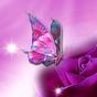 Kelebekli Duvar Kağıtları ღ Canlı Resimli 2.4