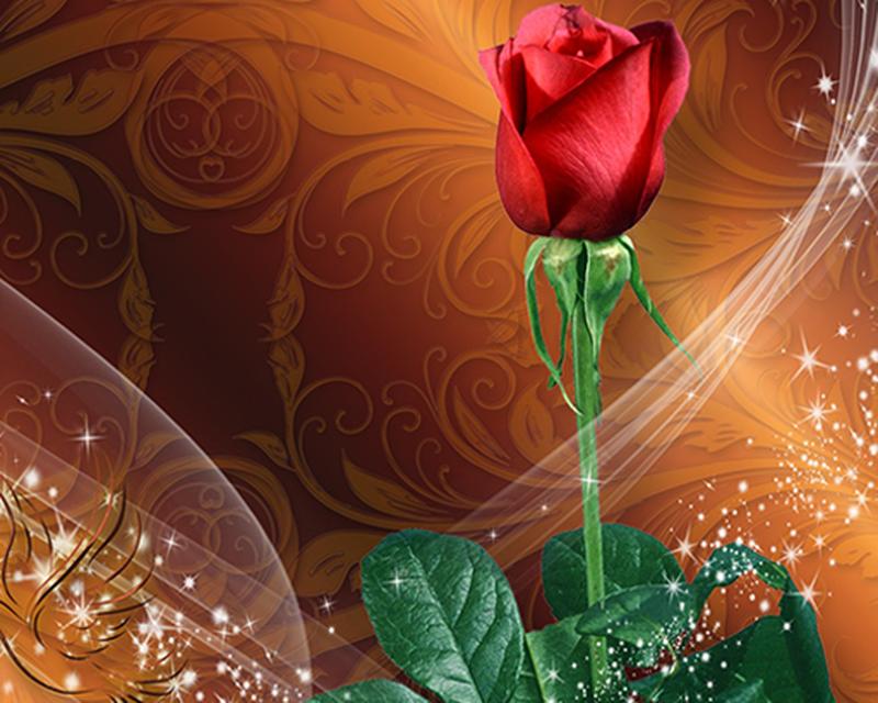Wallpaper Animasi Bunga Mawar Apk Download App Android