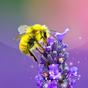 Bee Live Wallpaper 2.4
