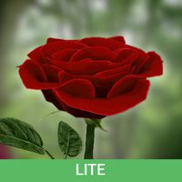 3D Rose Live Wallpaper Free icon
