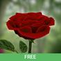 3D Rose Live Wallpaper Free 5.4