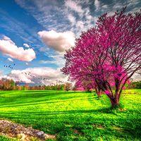 Frühling Live Hintergrund Icon