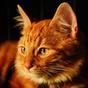 Falar Gato Adorável