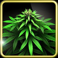 My Ganja Plant Live Wallpaper icon