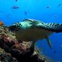 Sea Turtle. Live wallpaper.