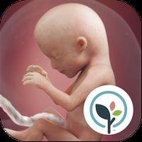 Pregnancy App & Baby Tracker icon