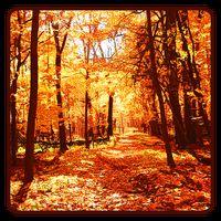 Autumn Wallpaper Apk Download App Android