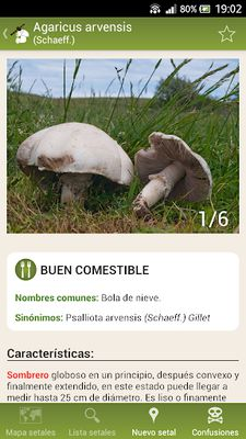 Image 4 from Fungipedia