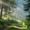 Orman Canlı Duvar Kağıdı 7.6