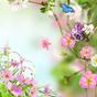 Flores Papel de Parede Vivo  APK