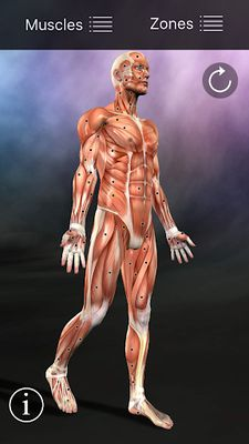 Image 7 of Muscle Points Anatomy