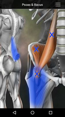 Image 5 of Muscle Points Anatomy