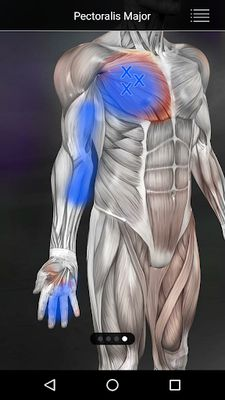 Image 2 of Muscle Points Anatomy