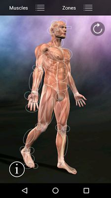 Image of Muscle Points Anatomy