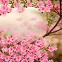 Весенние цветы Живые Обои