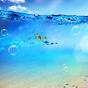 Okyanus Canlı Duvar Kağıdı