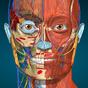 AnatomyLearning - 3D Atlas