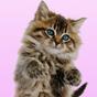 Dança Ronronando Gato Fundo