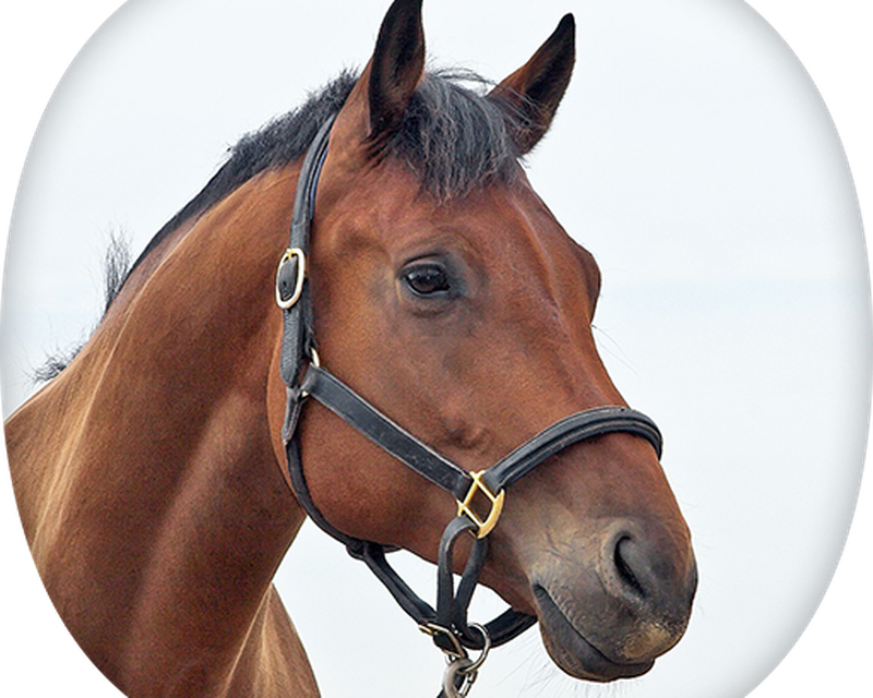 Pferde Apps Kostenlos