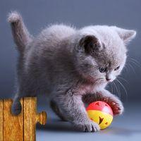 Katzen puzzle Spiel für Kinder Icon