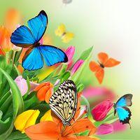 Icoană Fluture Imagini de Fundal