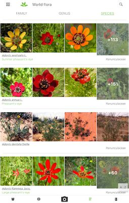 Image from PlantNet Plant Identification