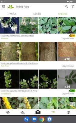 Image 3 of PlantNet Plant Identification