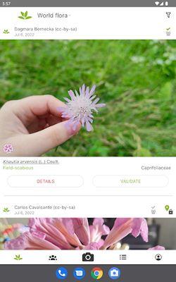 Image 2 of PlantNet Plant Identification