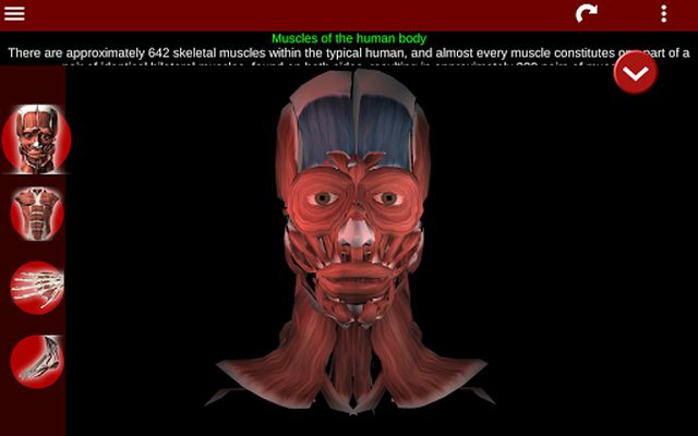 3D Muscular System Image 4 (Anatomy)