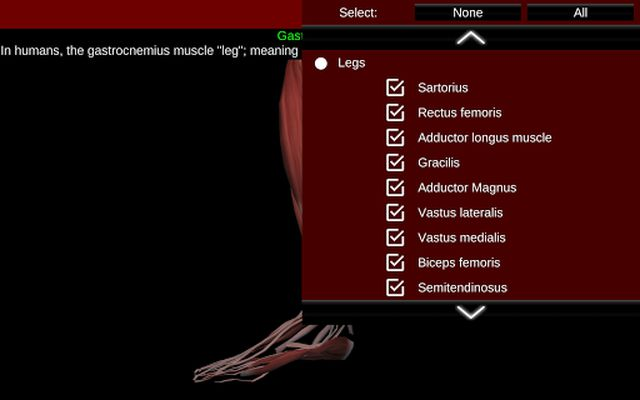 Muscular System 3D Image 1 (Anatomy)