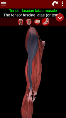 Muscular System 3D Image 18 (Anatomy)