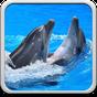 Delfine Hintergrundbilder