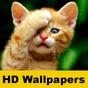Papéis de parede do gato