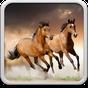 Pferde Hintergrundbilder