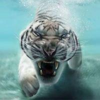 Ícone do do tigre Planos de fundo