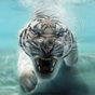 do tigre Planos de fundo