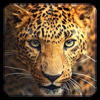 Wilde dieren Live Achtergrond icon