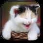 Funny Cat Live Wallpaper 1.4
